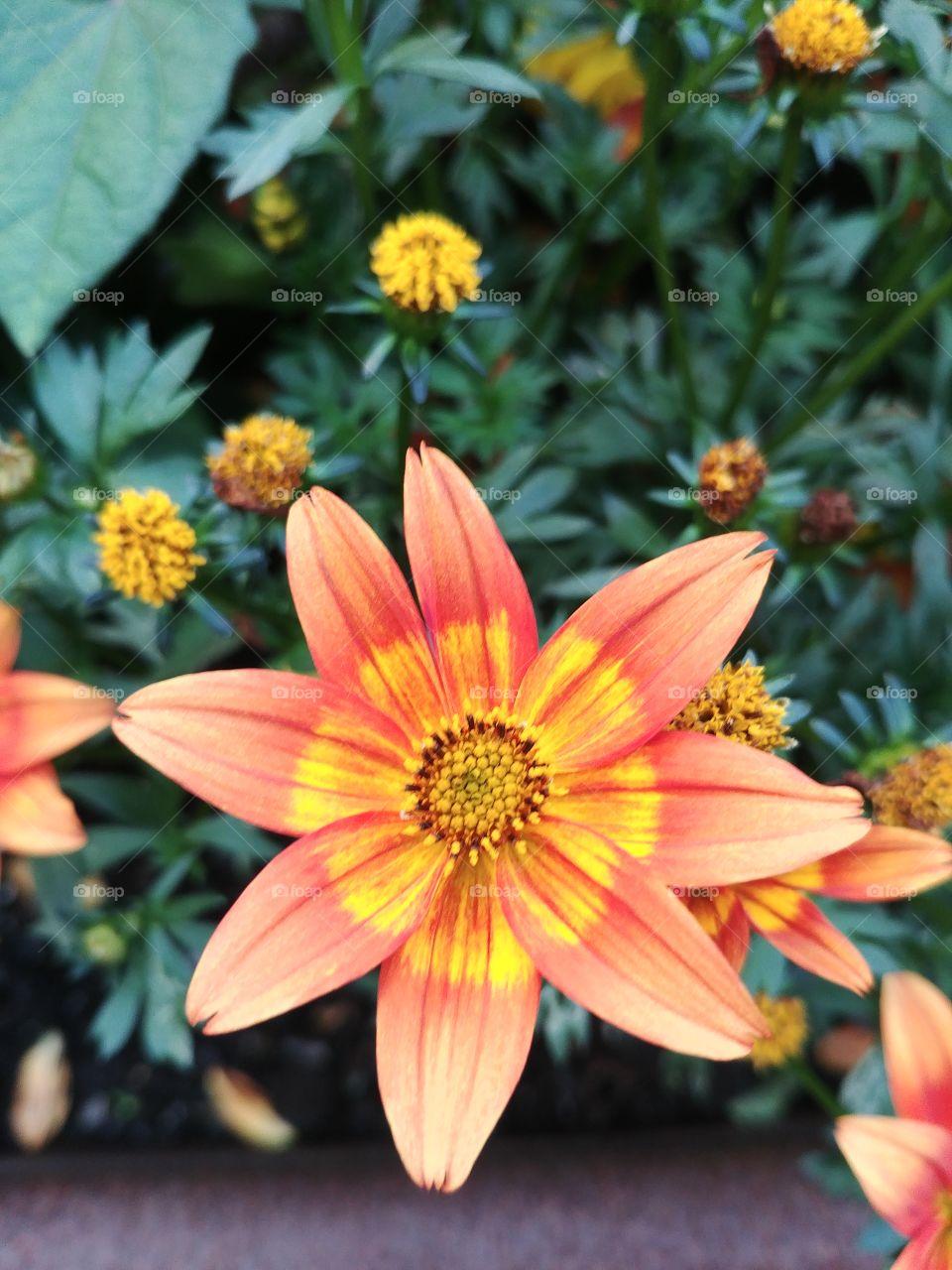 blume blühten Blüte orange Frühling spring Sommer summer