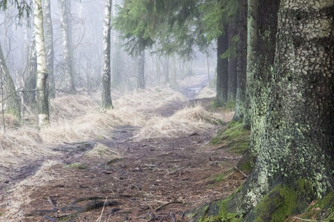 Path in foggy forest  - stig i skogen - dimma