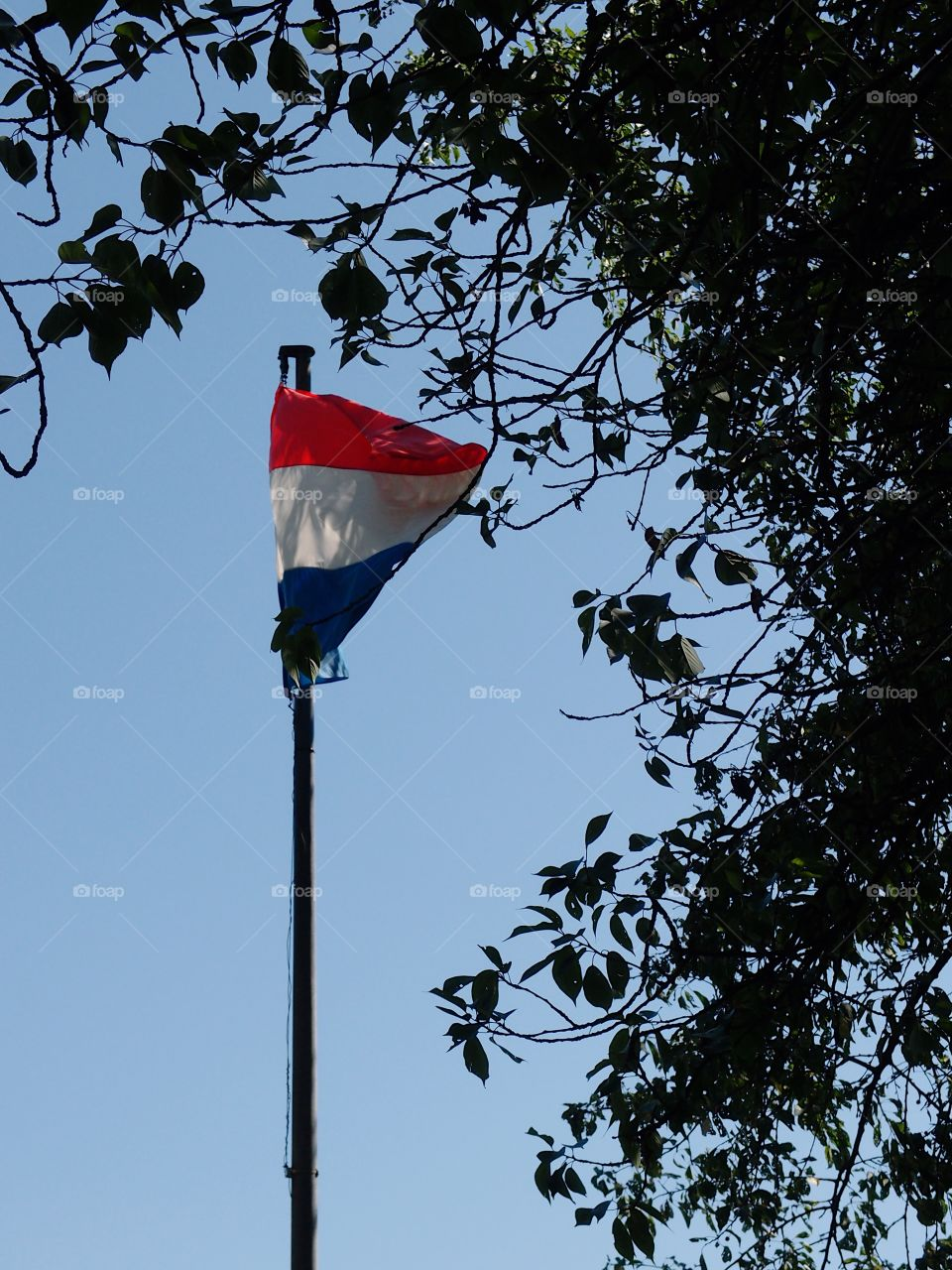 The Luxembourg flag moving with a nice summer breeze against a clear blue sky and framed by tree branches.