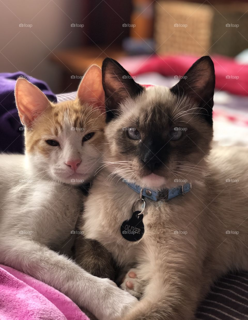 Two kitties snuggling together on the bed