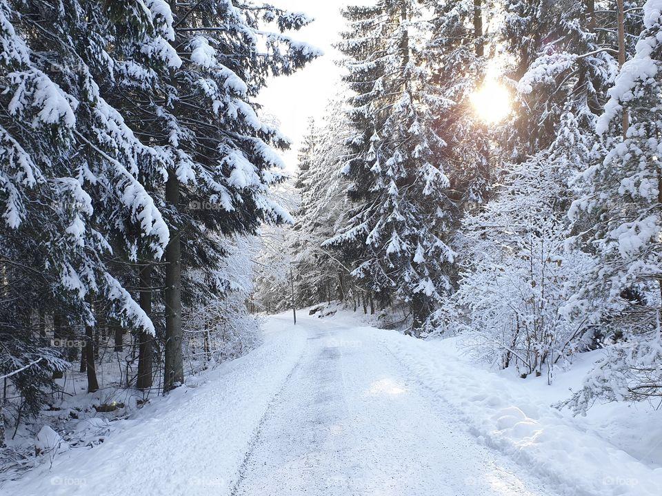 Beautiful sunny winter day snowy woods, fin solig vinterdag i skogen med mycket snö