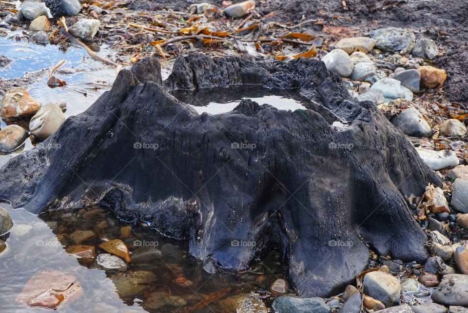 Petrified Tree Stump on Redcar Beach visible after a storm