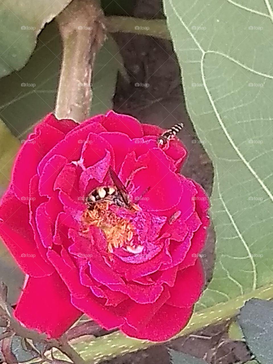Flower, Nature, Flora, Leaf, Petal