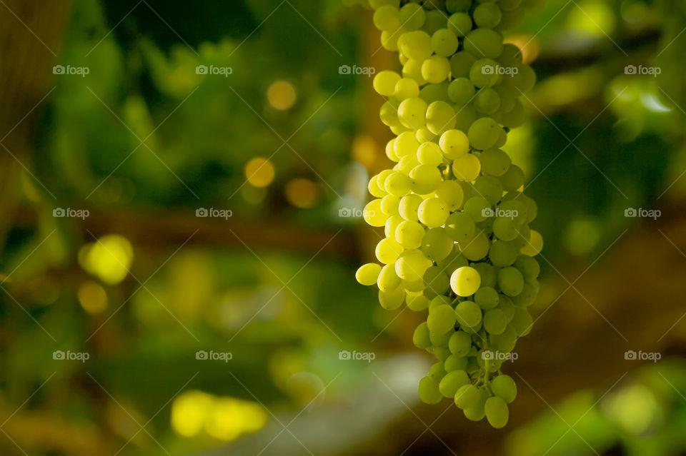 green italy vineyard yellow by kuzeytac