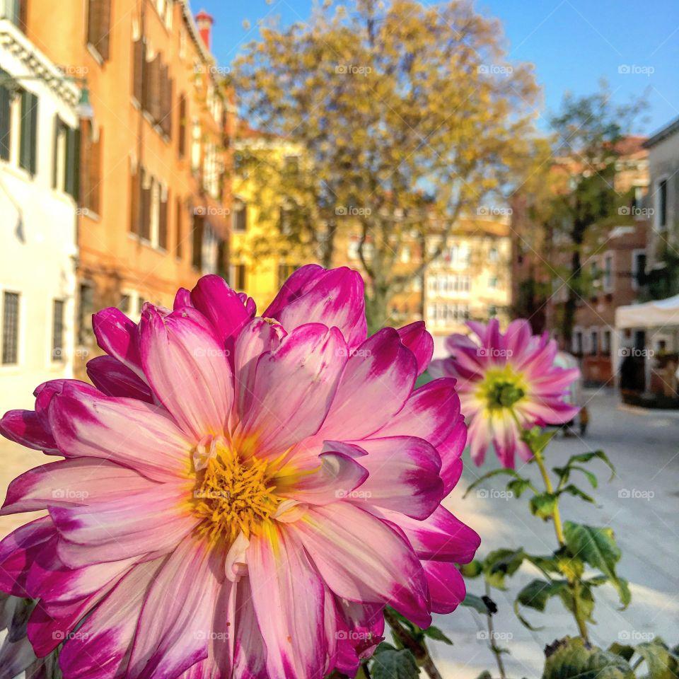 Flower, Nature, Summer, No Person, Garden