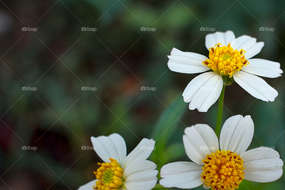 Isolated flower plant