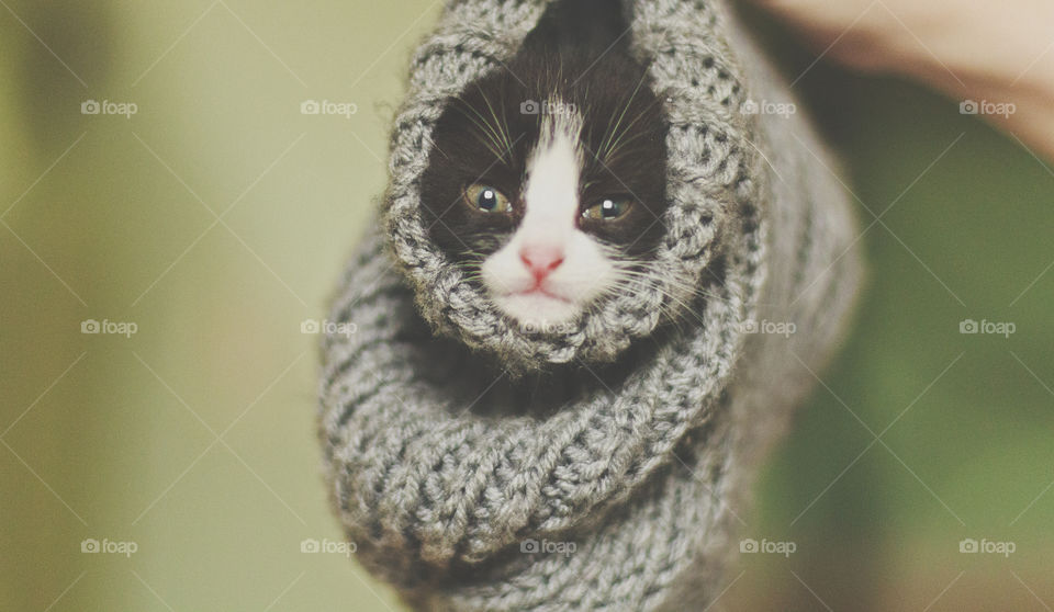 The litle cat