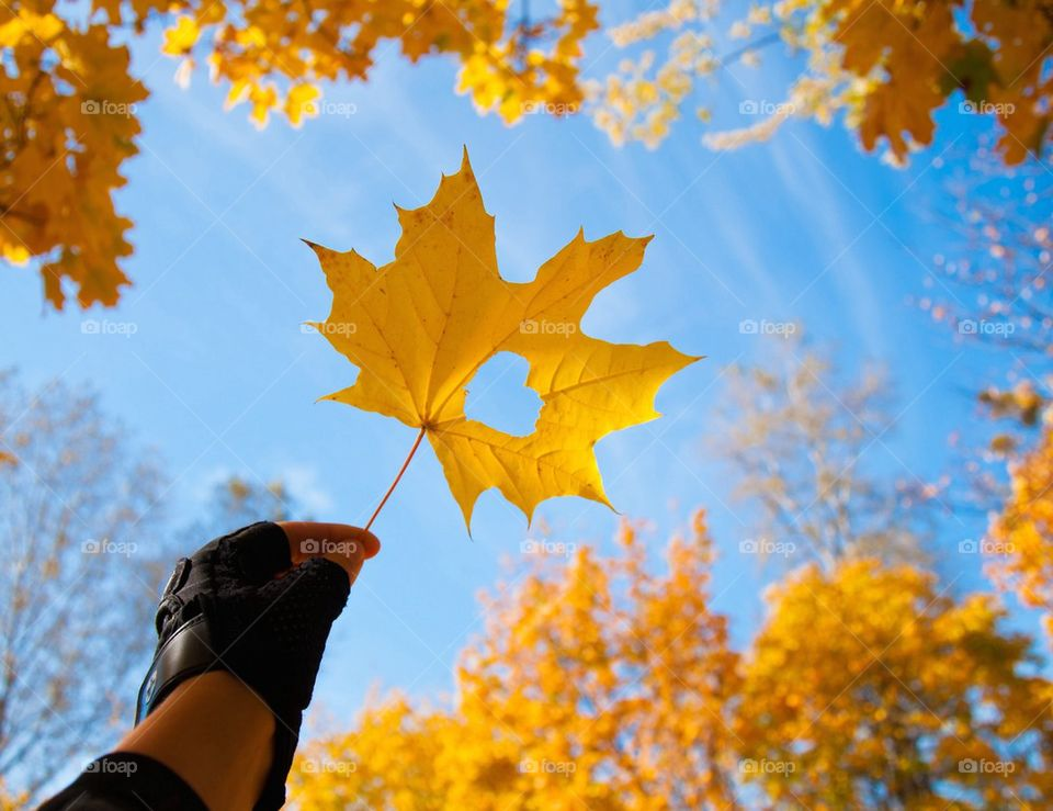 from autumn with love,autumn,forest,sky,golden,warm