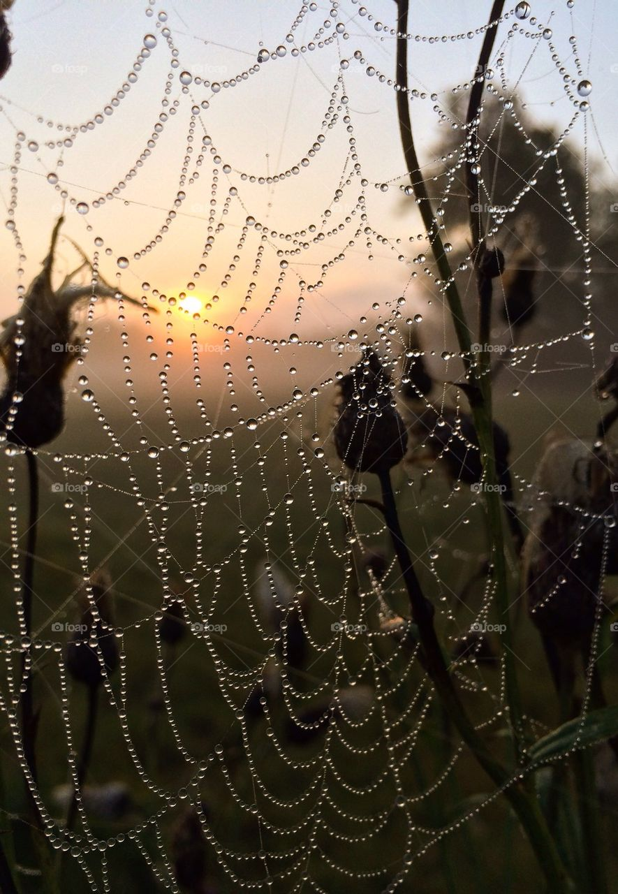 Sunrise through a spider web