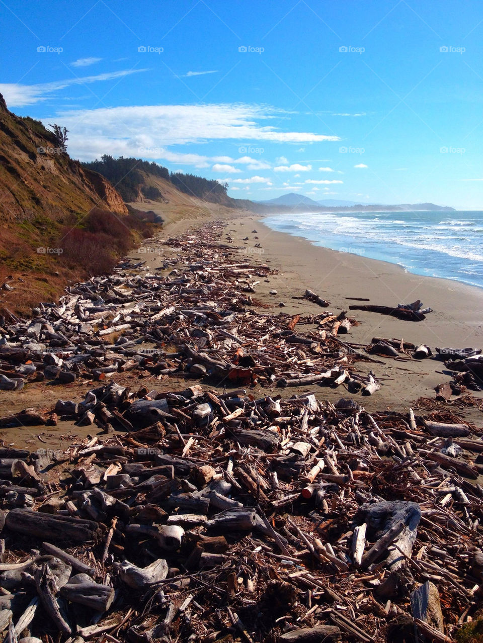 Cape Blanco coast.  Cape Blanco coast strewn with old timber logs. Oregon central coast, USA