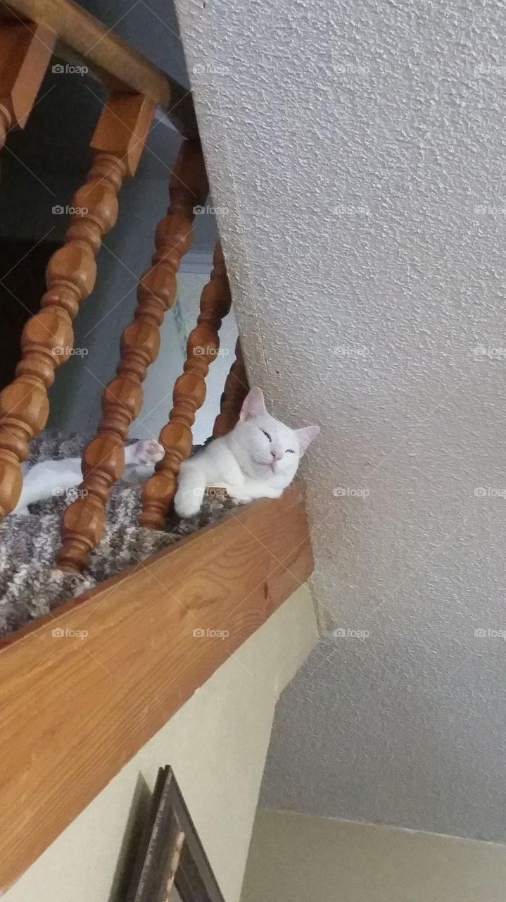 cat,stairs