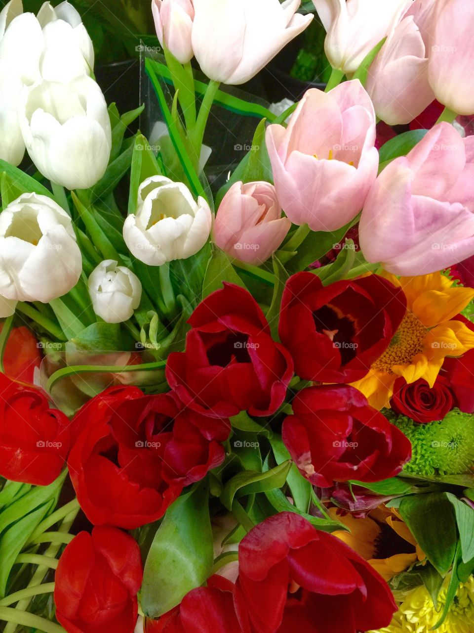 Bunch of different color tulips