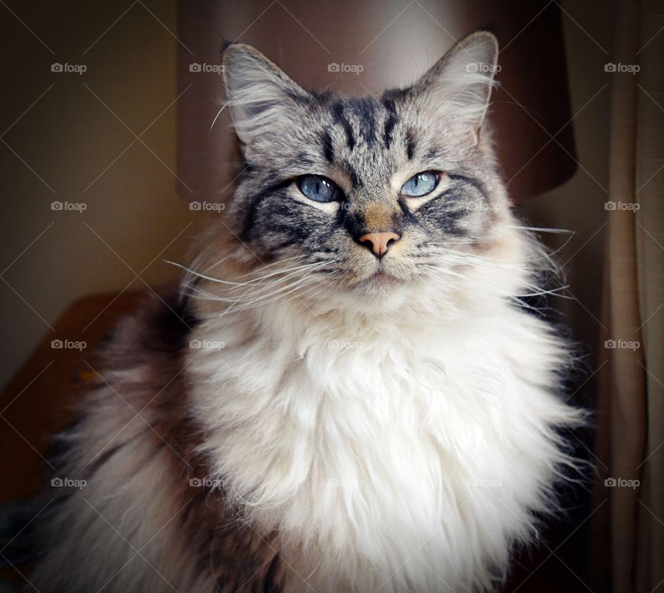 Portrait of fluffy cat