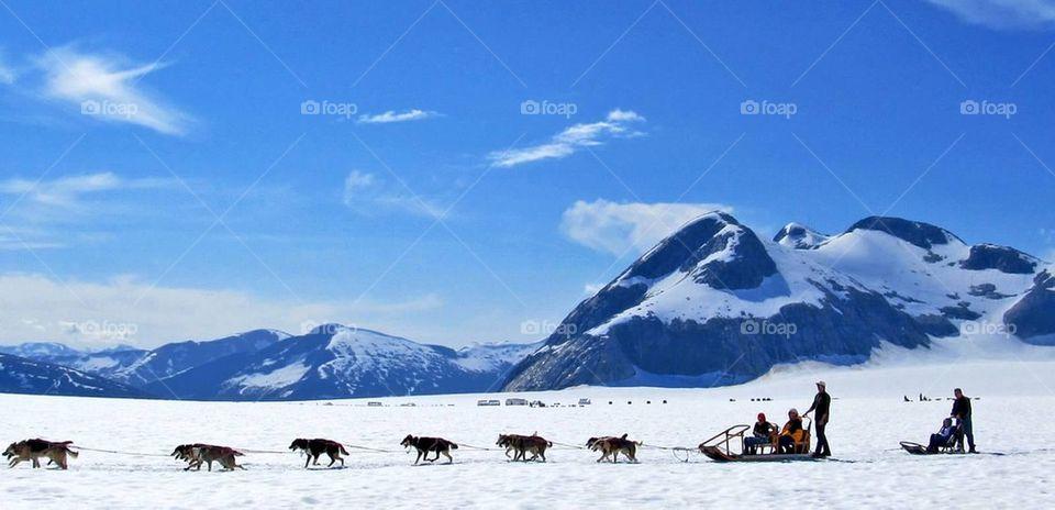 Dogsled Alaska