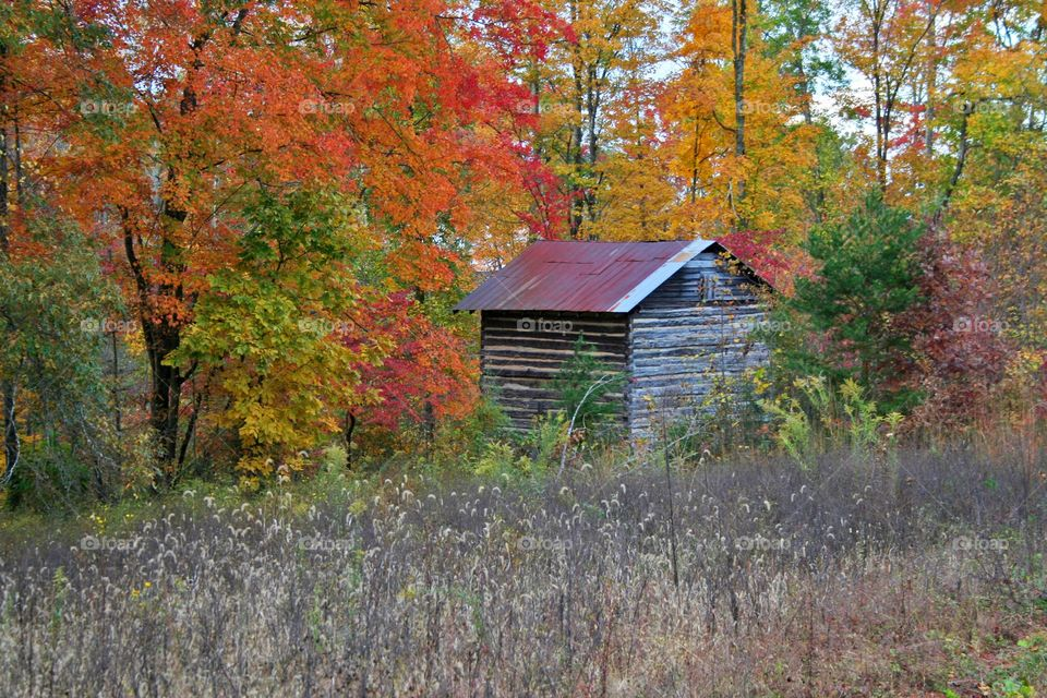 Cabin Surrounded by Color.