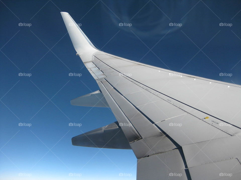 Wing through the clear skies