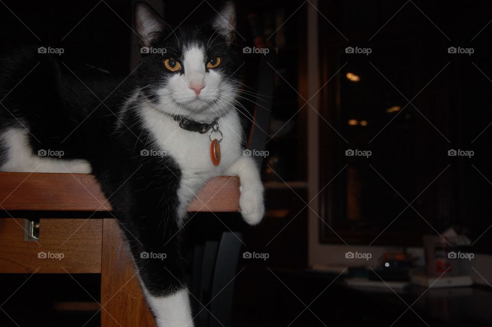 A beautiful cat sitting elegantly on the corner of a table. The focus is drawn to him.