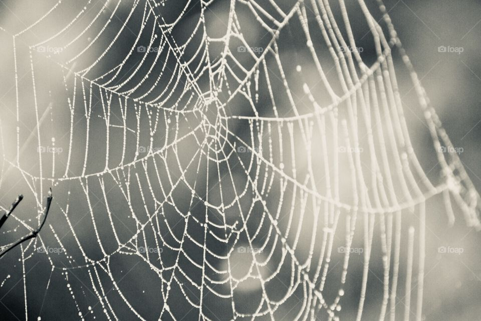 Black and white web