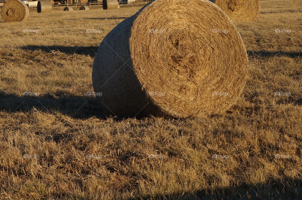 Golden hay bale roll at sunset. Photo taken in Oklahoma.  Setting sun provides long shadow and lighting of hay bale rolls.