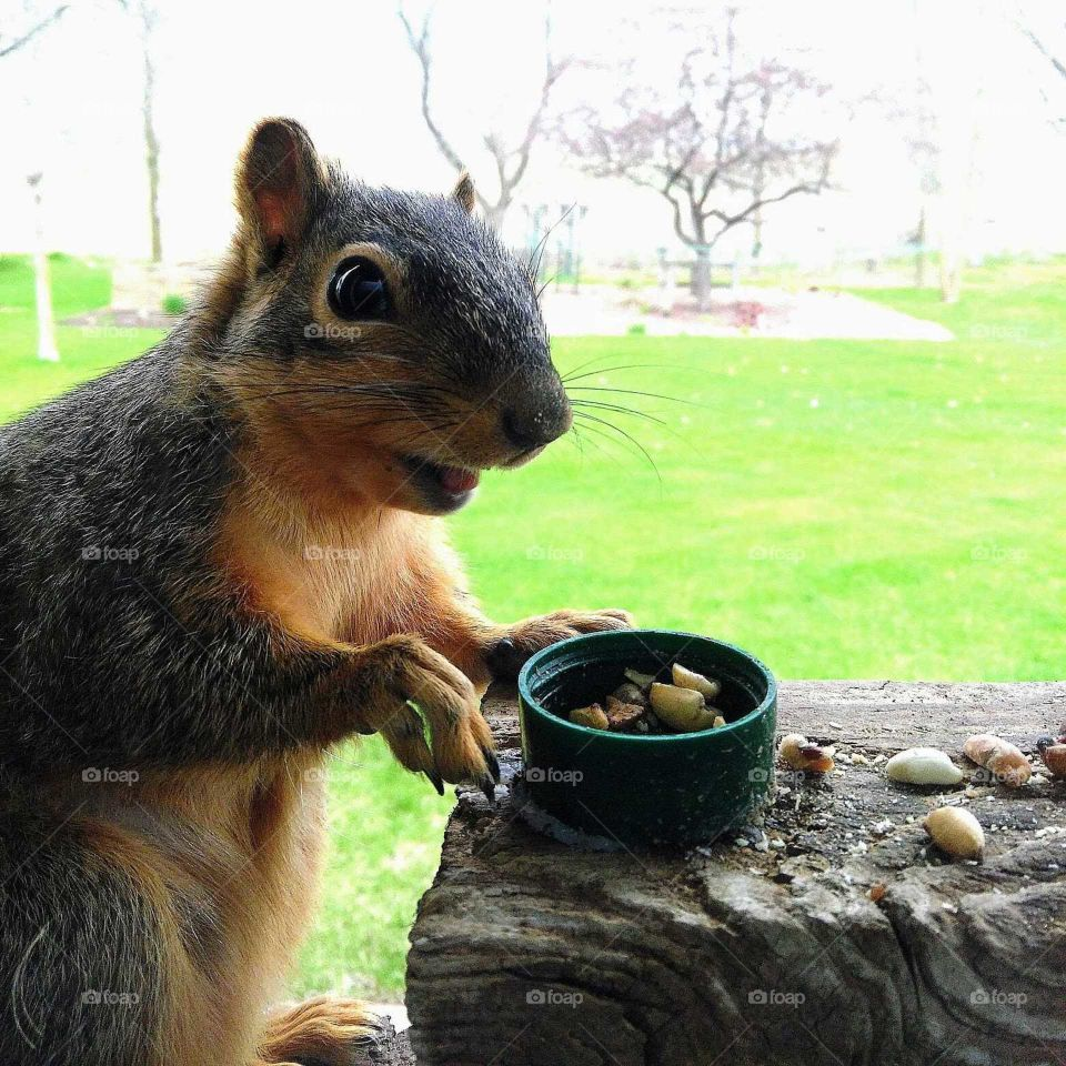 Thank You For The Peanuts