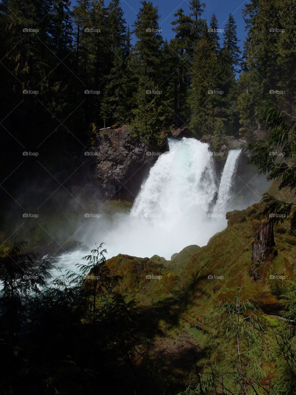 The beautiful waters of Sahalie Falls on the McKenzie River rushing over a rugged cliff into its canyon covered in bright green moss, trees, and tree stumps on a sunny spring day in Western Oregon.