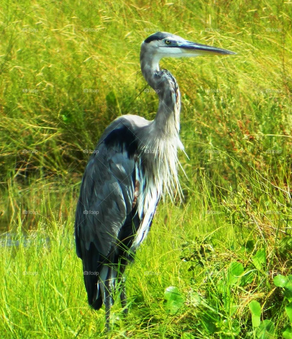 Close-up of heron in grass