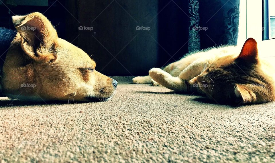 Best buddies..... cat and dog
