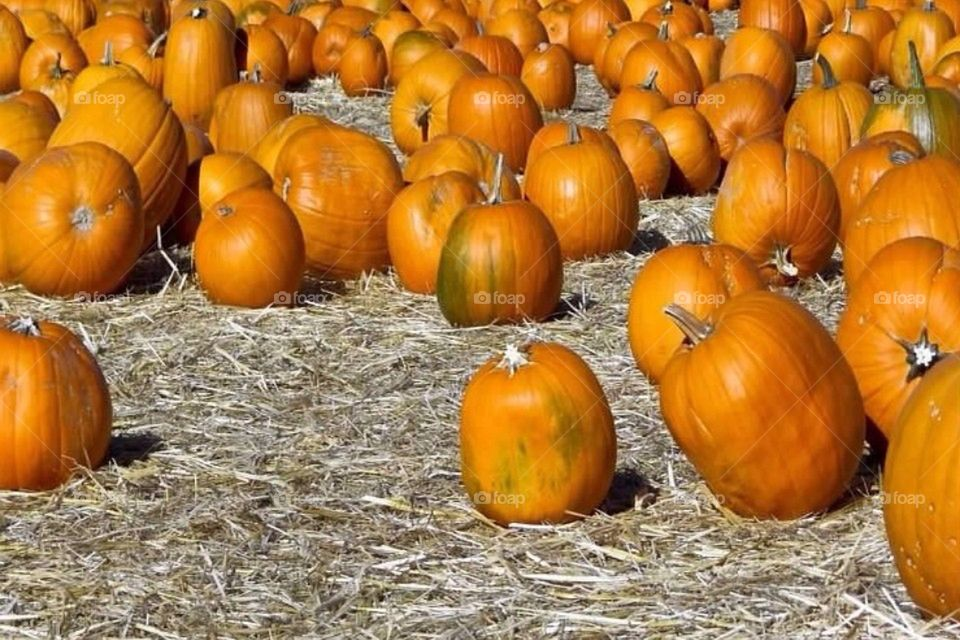 pumpkin kgphotography by kghilieri
