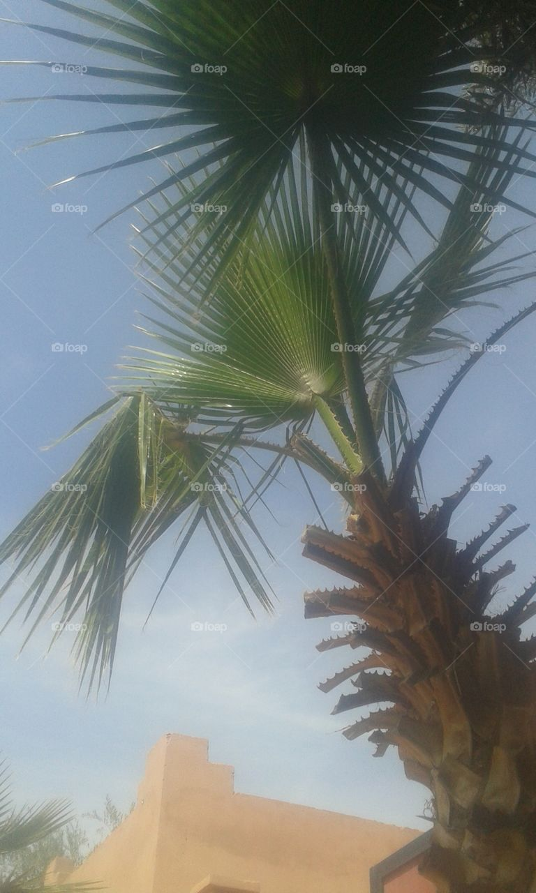 No Person, Tropical, Palm, Summer, Tree