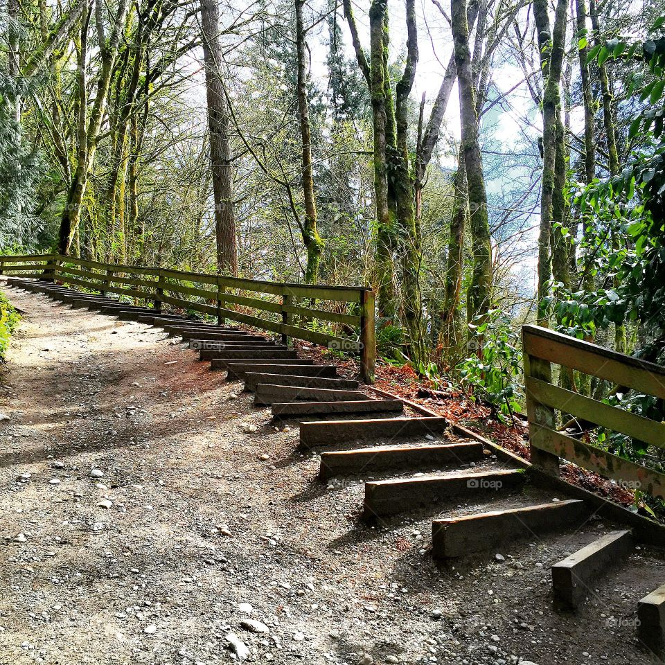 A trail. This park is In Lynnwood. I was jogging for 2 hours and suddenly I catch this moment