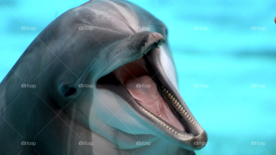 Funny laughing dolphin