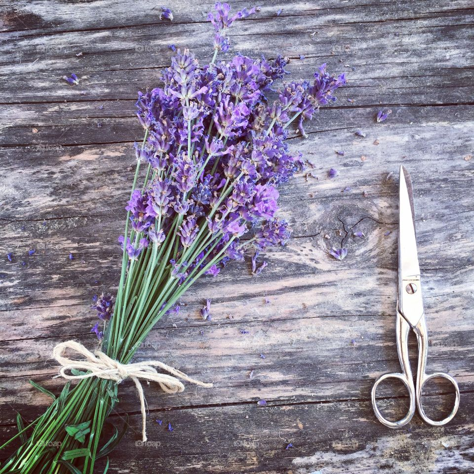 Elevated view of lavender flower and scissors on wood