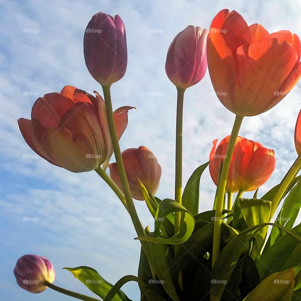 I ❤ tulips!