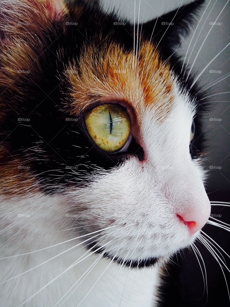A cat staring out of the window