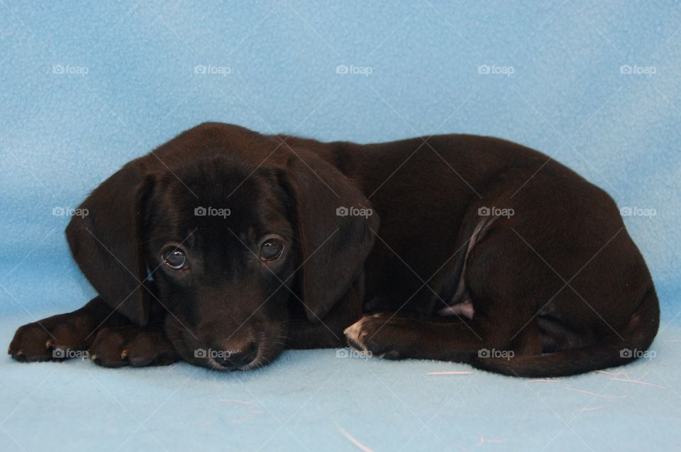 Close-up of black dog