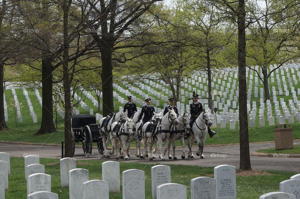 Horse drawn casket at Arlington Cemetery.