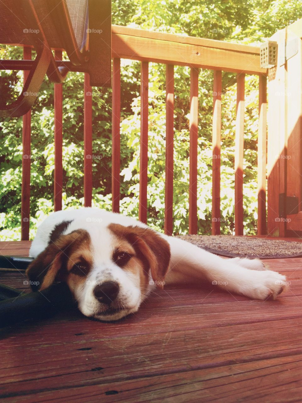 Puppy on porch. Sleepy puppy relaxes on the deck
