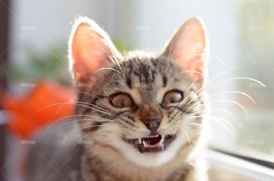 Striped kitten smiling