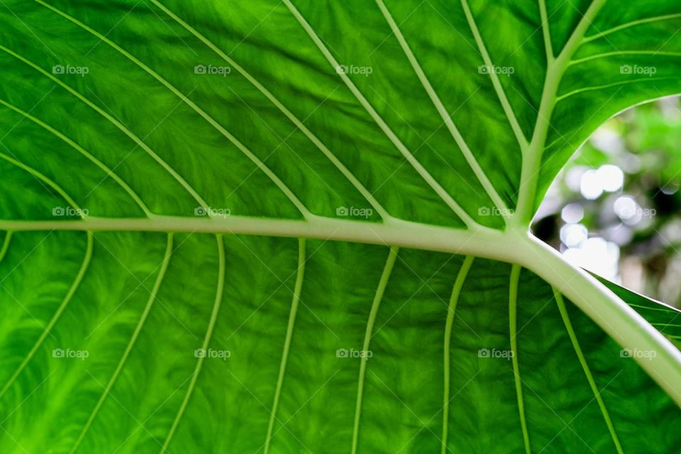 Bokeh through the tropical leaf