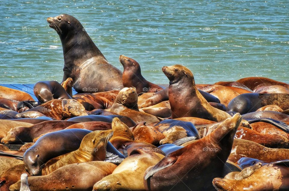 Harbor seals in the bay