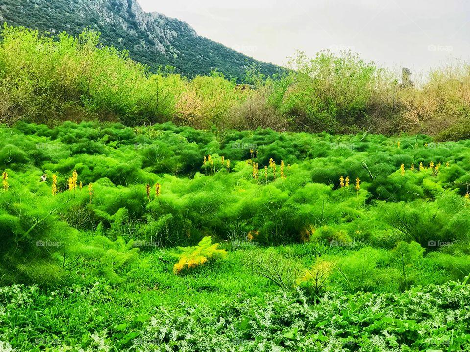 nature in selcuk