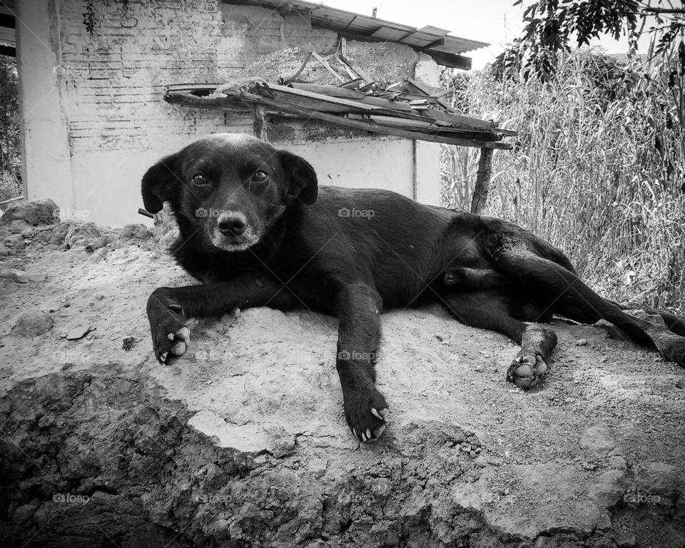 Sad and lonely abandoned dog