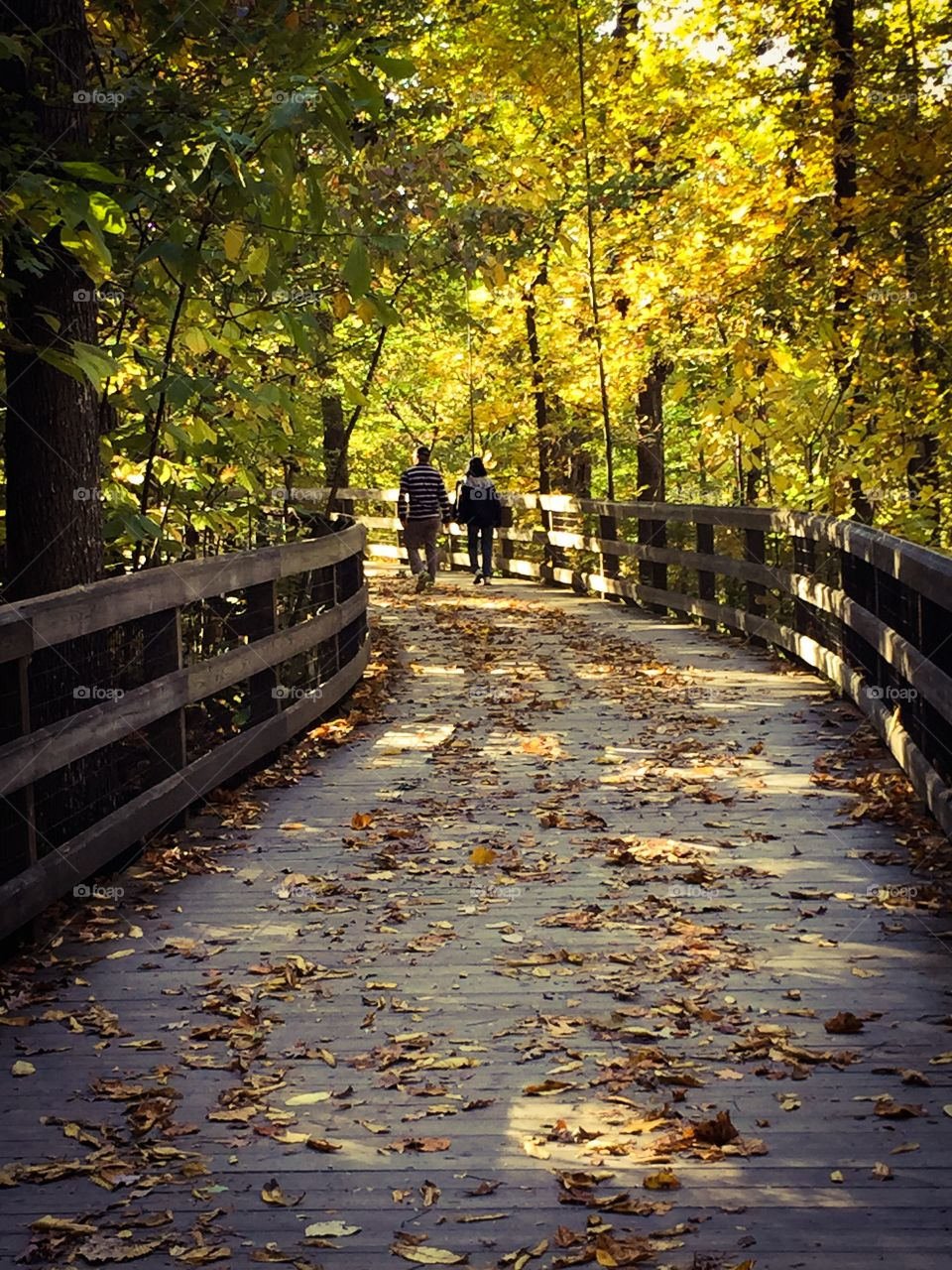 Autumn Stroll. Walking on a fall day, under a canopy of colorful trees with leaves scattered underfoot