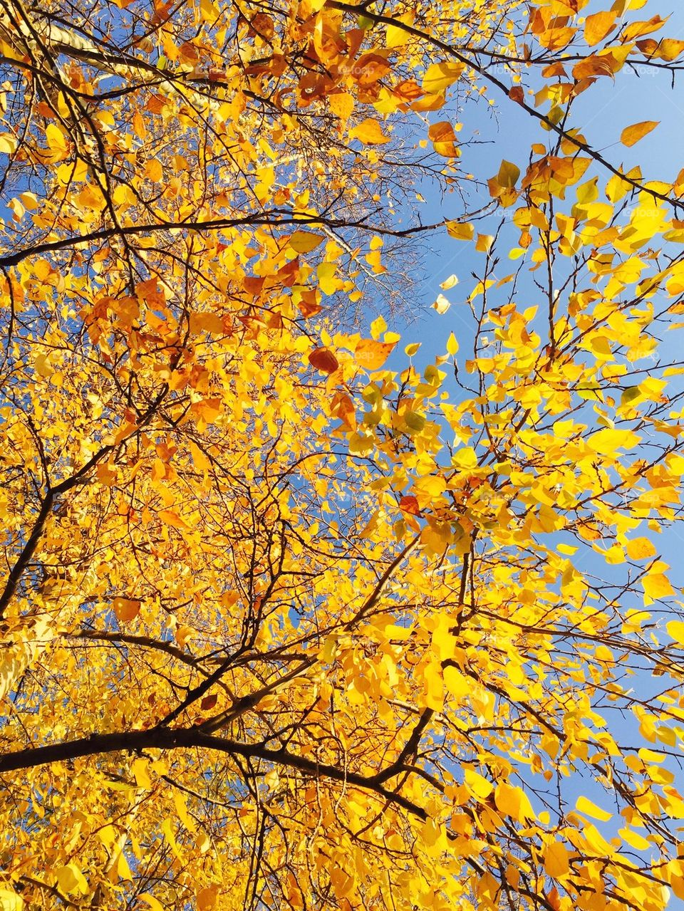 Low angle view of autumn lead on tree