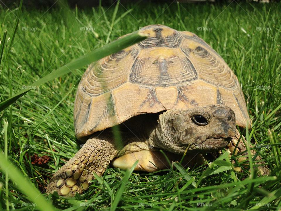 green grass animal tortoise by TheShaman