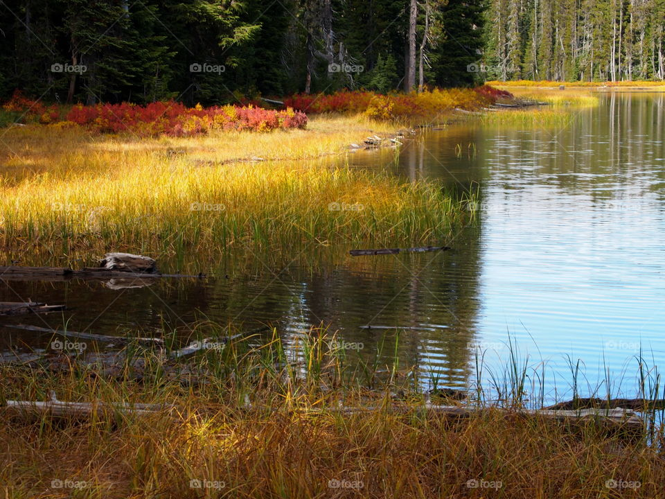 A small lake high up in the woods near the Old McKenzie Pass in Western Oregon with fall colors amongst the reeds and wild grasses.