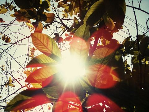 Sun Rays Coming inside A Tree