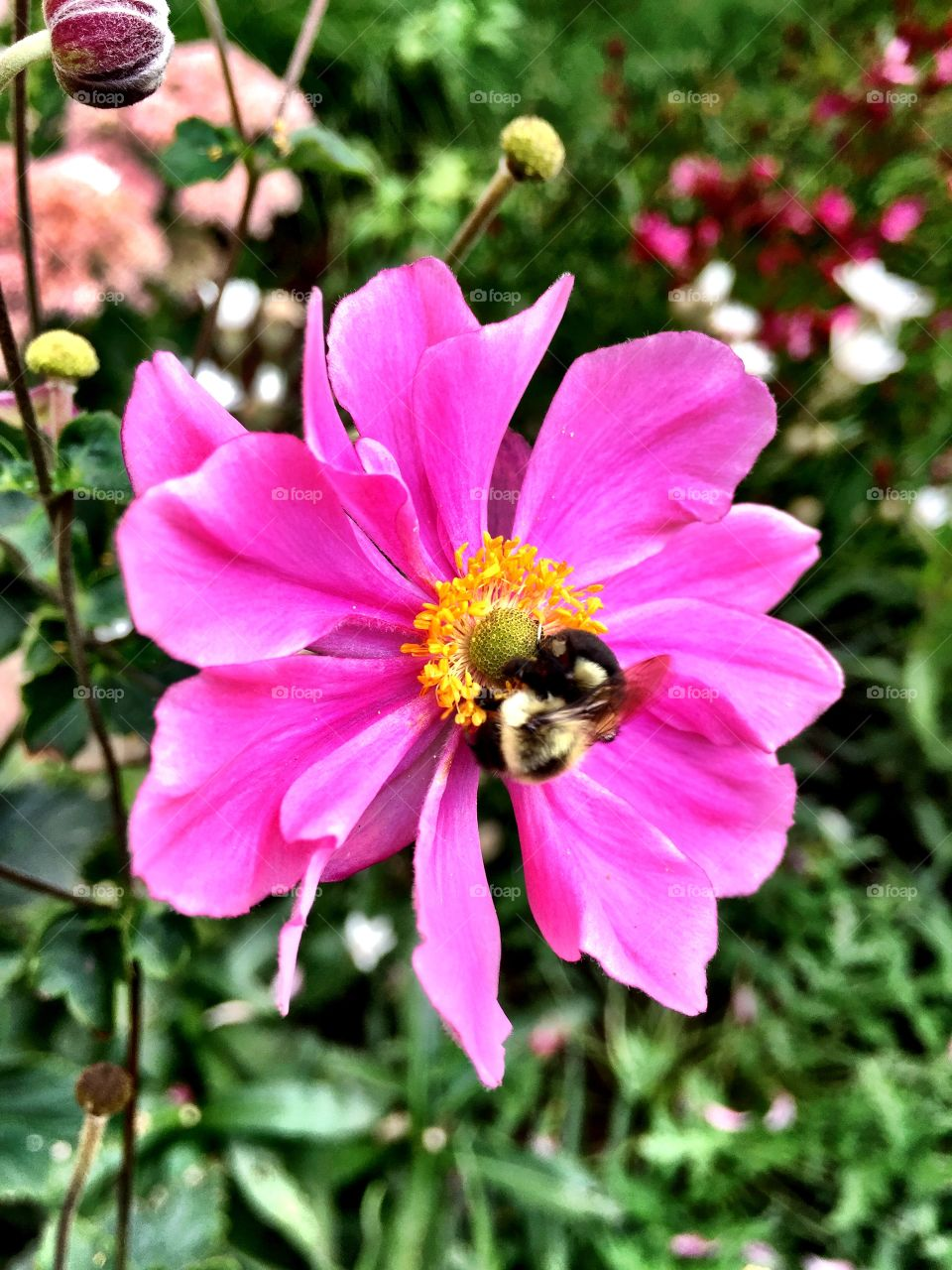 Bee pollinating on pink flower
