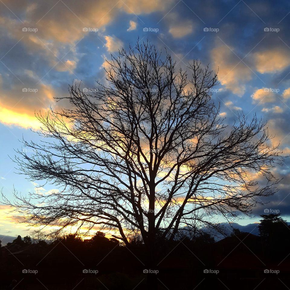 evening sunset tree