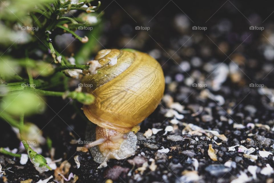 Snail By A Plant, Snail After The Rain, Slow Moving Snail, Colorful Snail Shell, Snail In The Garden, Snail In The Flower Bed